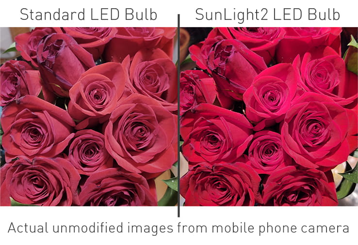 SunLight2 vs Regular LED Bulb Color Rendering Comparison